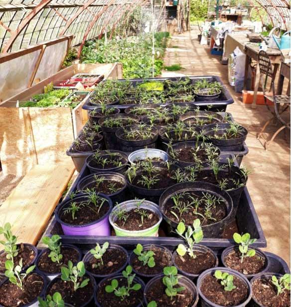 Le jardin «Sous-les Tilleuls» est généreux !