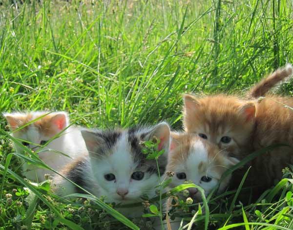 Chats au jardin Sous Les Tilleuls à Bruxelles